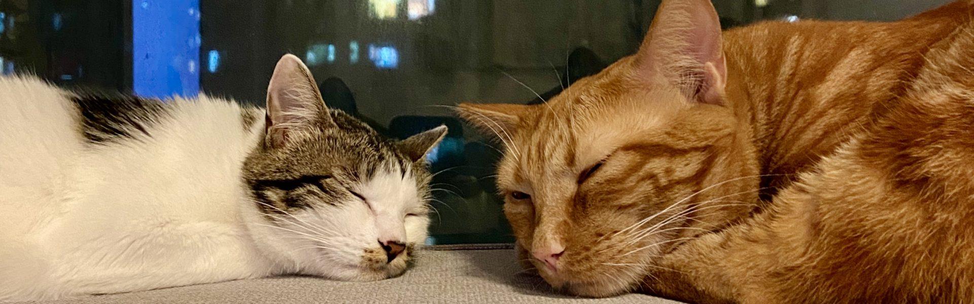 Couple Overcooked